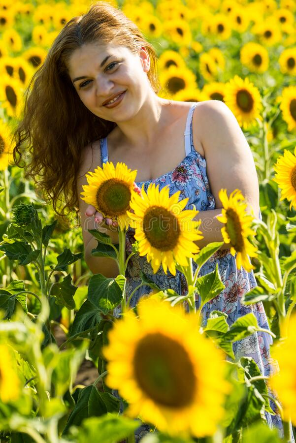 Happy woman posing in sunflowers field stock images