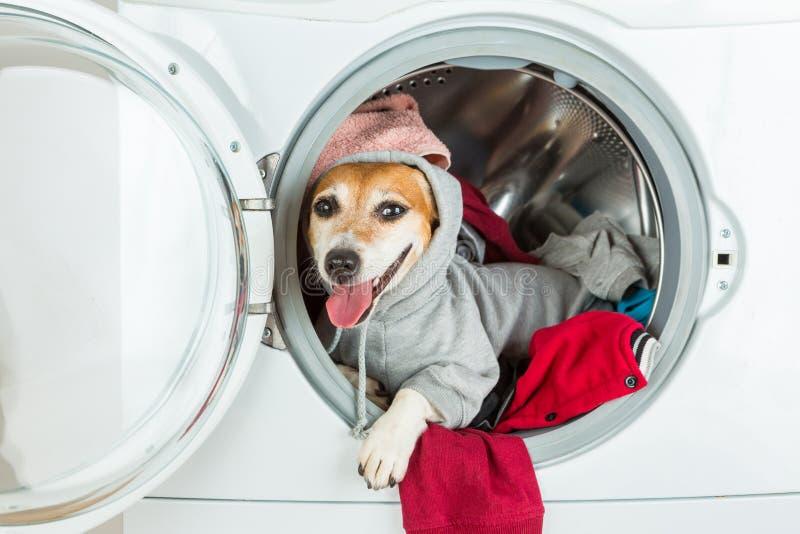 Happy relaxed house work helper lying inside washing machine. stock image
