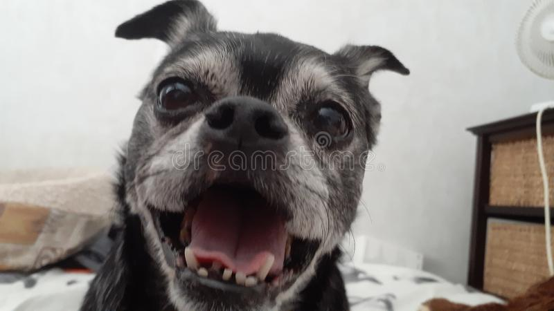 Happy rescued dog stock photography