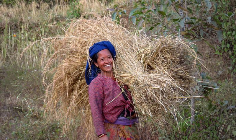Happy rice field worker, woman carries a big bundle of straw, Nepal. Gairi Pangma, Sankhuwasabha District, Nepal - 11/18/2017: smiling nepalese woman working in stock image