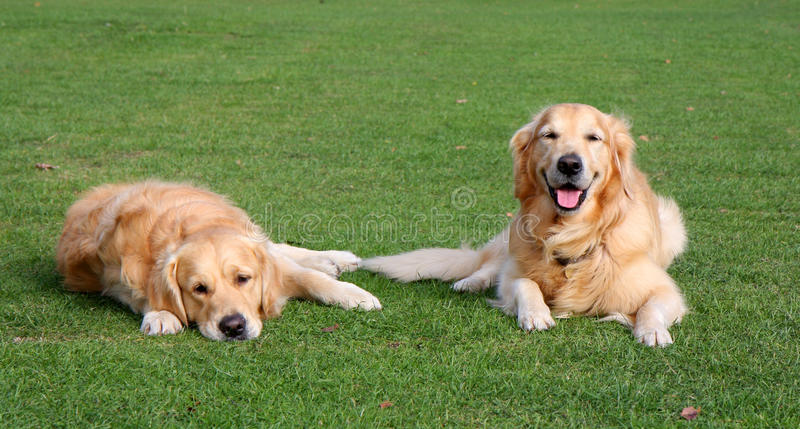 Happy and sad dogs stock photos