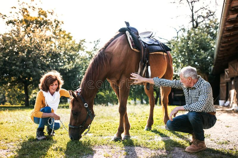 A senior couple crouching and a horse grazing by a stable. A happy senior couple crouching and a horse grazing by a stable royalty free stock photos