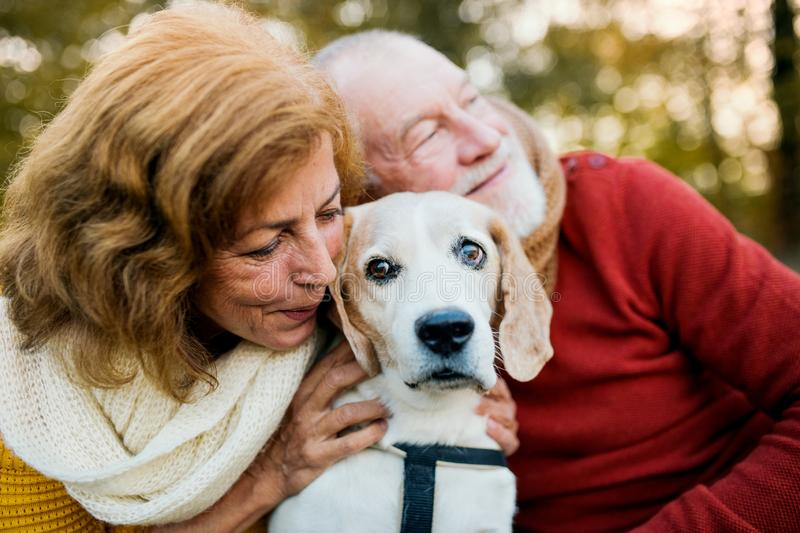 A senior couple with a dog in an autumn nature at sunset. royalty free stock image