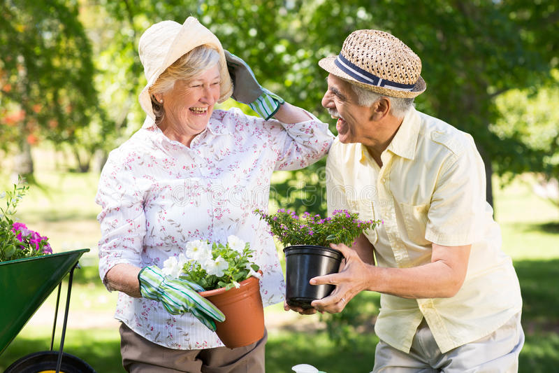 Happy senior couple gardening stock images