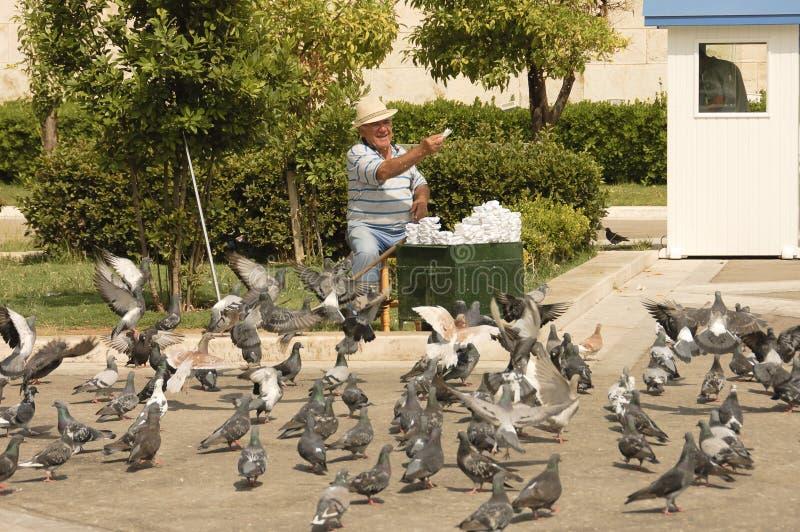 Happy senior feeding pigeons stock photo