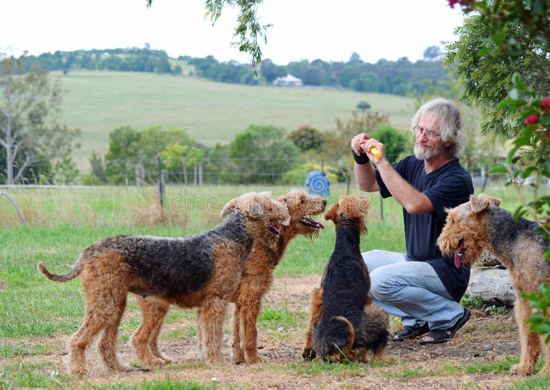 Happy senior man playing with his pack of loving loyal companion dogs royalty free stock images