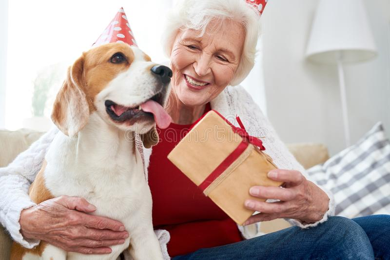 Happy Senior Woman Celebrating Birthday with Dog. Portrait of happy senior woman hugging dog and holding gift box while celebrating birthday sitting on royalty free stock images