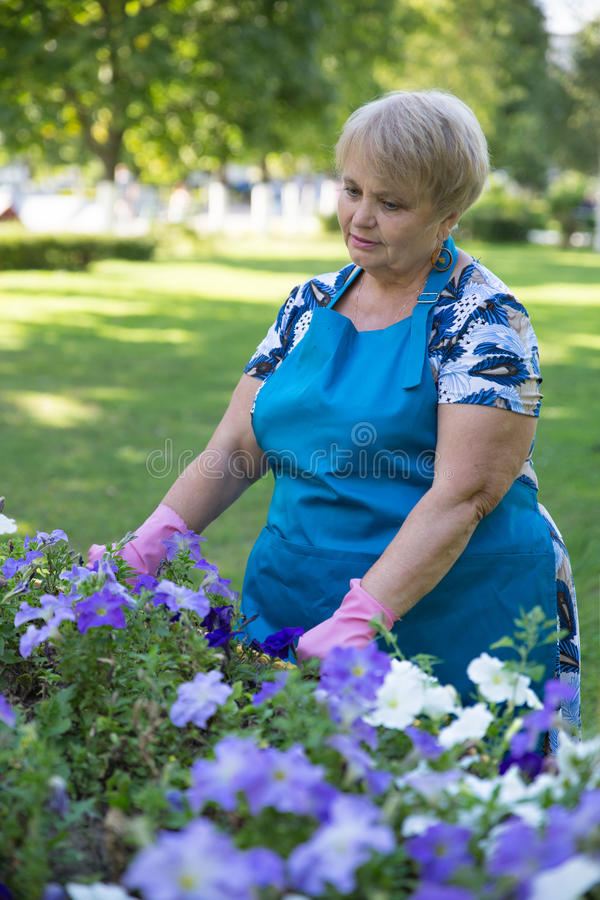 Happy senior woman gloved works in the garden royalty free stock photography