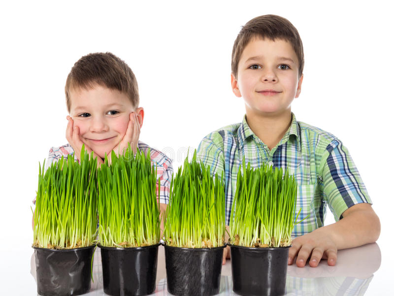 Happy and serious boys with fresh green grass. stock photography