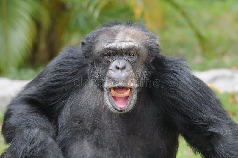 Download Happy smile stock image. Image of monkey, animal, keeper - 17248995