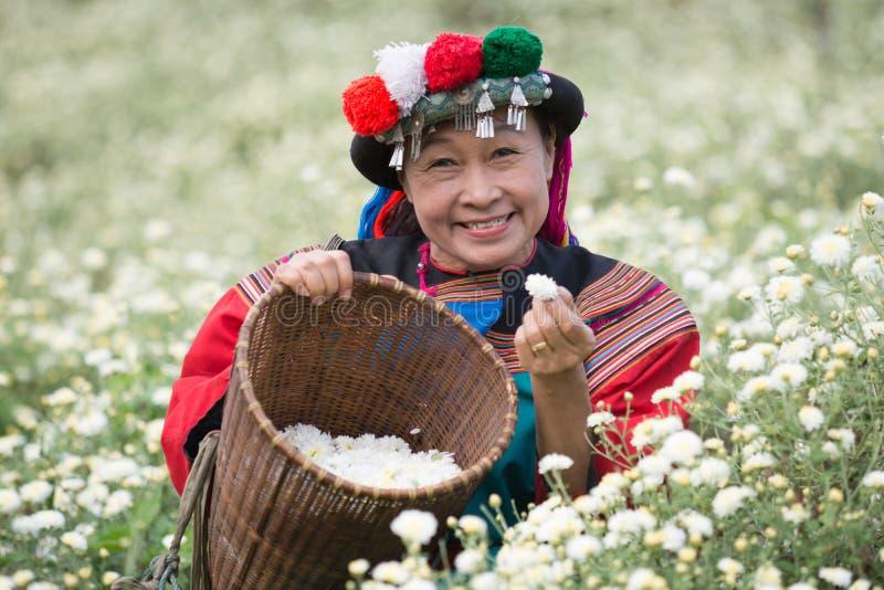 Happy smile hill tribe Chrysanthemum garden royalty free stock image