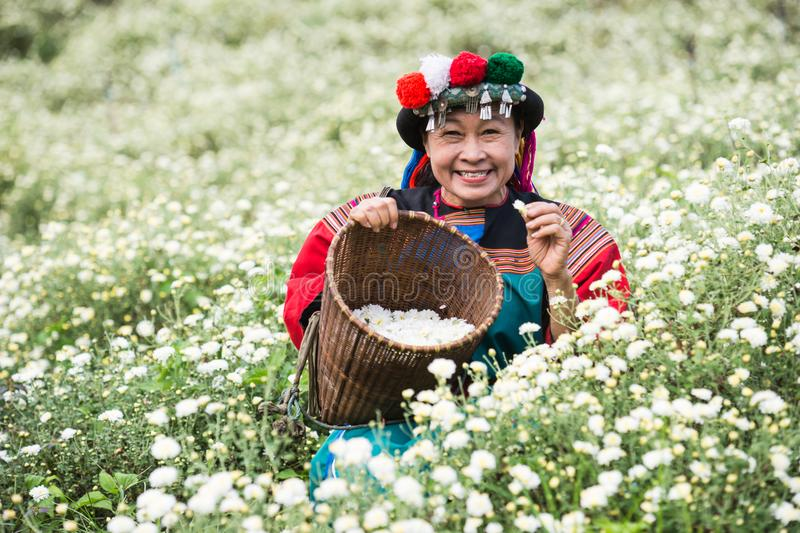 Happy smile hill tribe Chrysanthemum garden. Happy smile hill tribe in Chrysanthemum garden with colorful costume dress stock photo