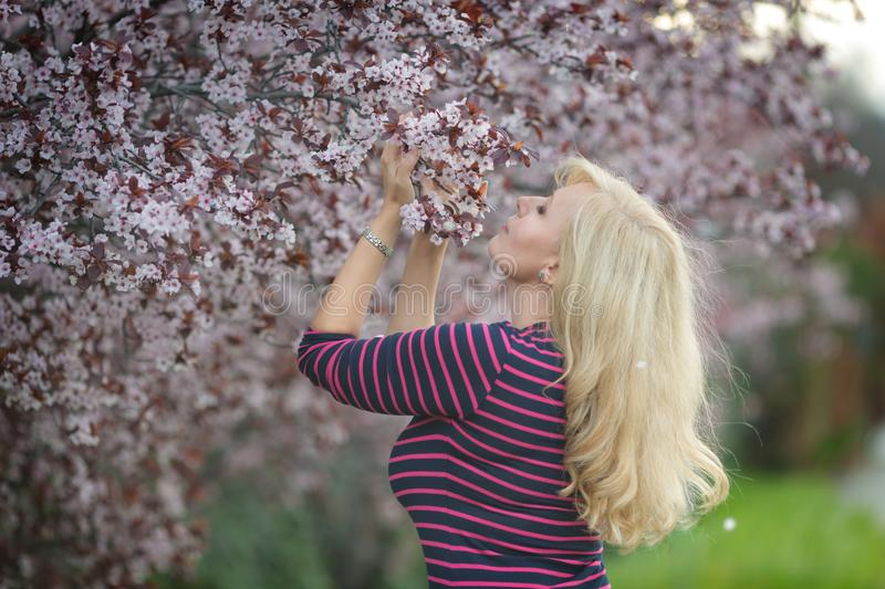 Happy smiling Caucasian blond woman with long hair smiles and happy near blossoming plum cherry tree, enjoys the blossom. Looking stock image