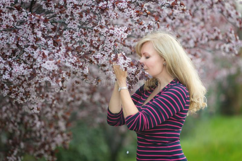 Happy smiling Caucasian blond woman with long hair smiles and happy near blossoming plum cherry tree, enjoys the blossom royalty free stock photos