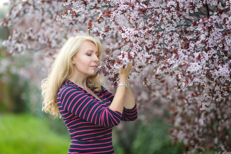 Happy smiling Caucasian blond woman with long hair smiles and happy near blossoming plum cherry tree, enjoys the blossom. Looking royalty free stock photo