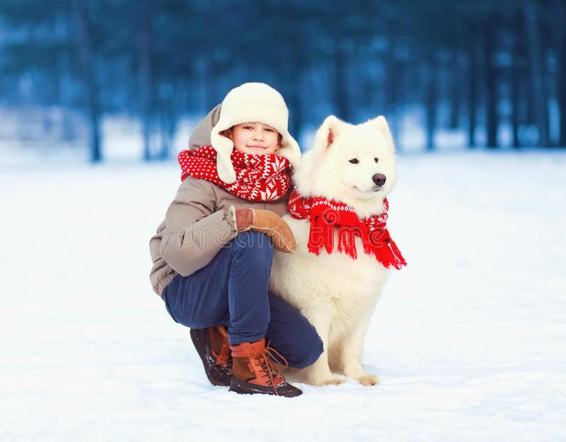 Happy smiling child boy is walking with white Samoyed dog in winter royalty free stock photos