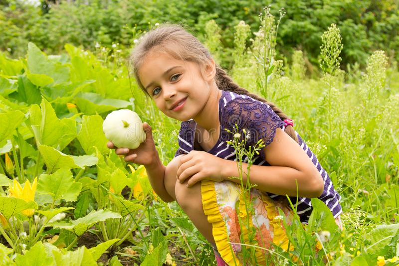 Happy smiling little girl harvesting fresh squashes in a garden and holding small fresh squash in her ha royalty free stock image