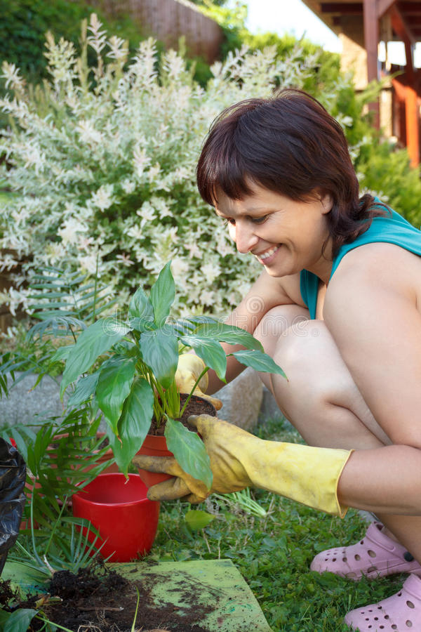 Download Happy Smiling Middle Age Woman Gardening Stock Images - Image: 33567784