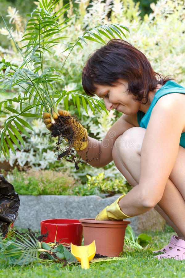 Download Happy Smiling Middle Age Woman Gardening Stock Image - Image: 33567785
