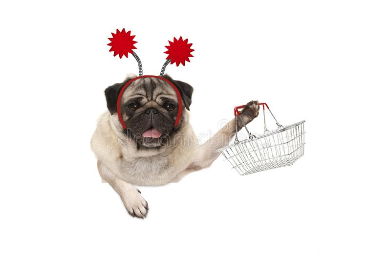 Happy smiling pug puppy dog holding up wire metal shopping basket, wearing red diadem stock photos