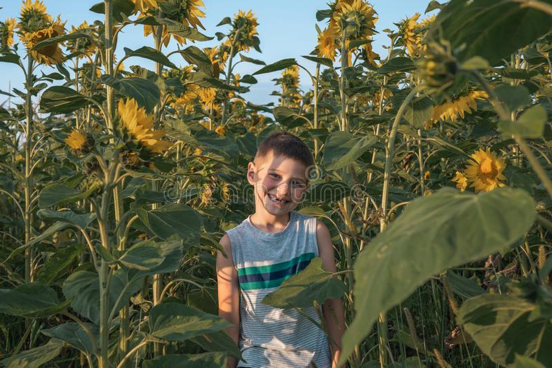 Happy smiling teen boy without front teeth wearing casual grey t-shirt standing among sunflowers and looking at the royalty free stock photo