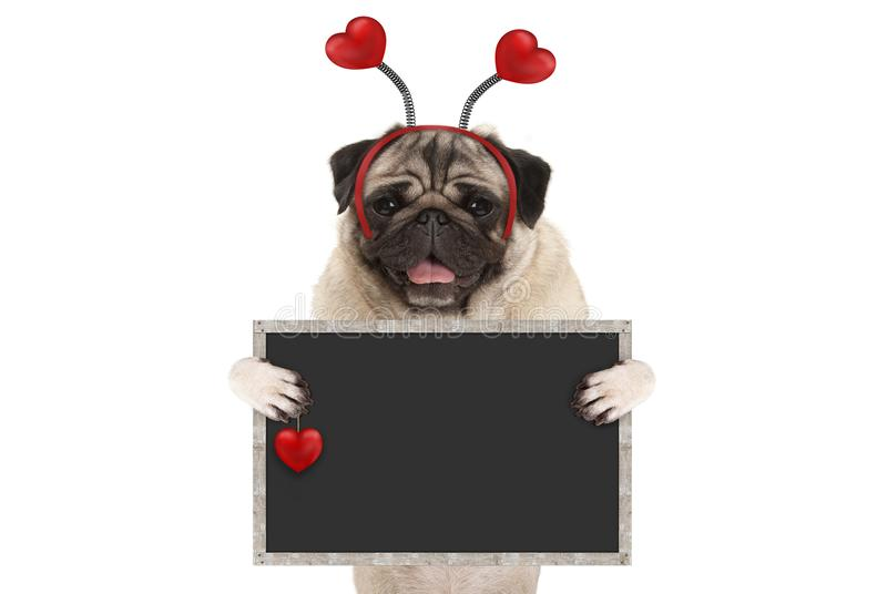 Happy smiling Valentine`s day pug puppy dog with hearts diadem and blank blackboard sign in paws royalty free stock images