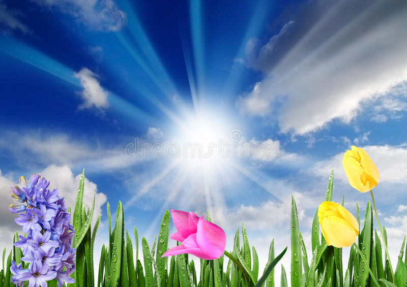 Happy spring morning. Spring flowers stock image