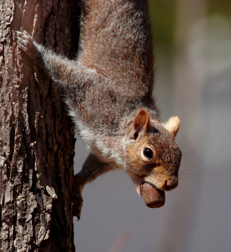 Download Happy squirrel stock image. Image of provision, funny - 2390861