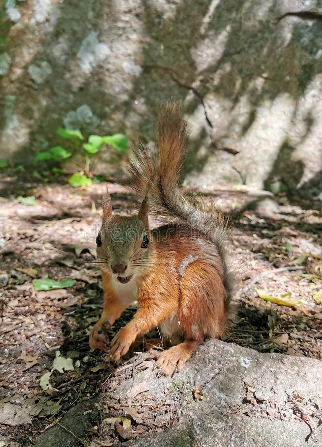 Happy squirrel In the Woods stock photos