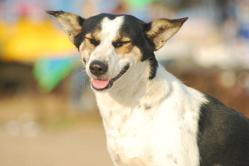Happy Stray Dog. Stray Dog relaxing in the sun at the Promenade in Pondicherry stock image