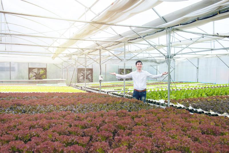 Happy successful handsome asian man spread two hand with smile in greenhouse hydroponic organic nursery farm, Small business. Entrepreneur and organic vegetable stock images