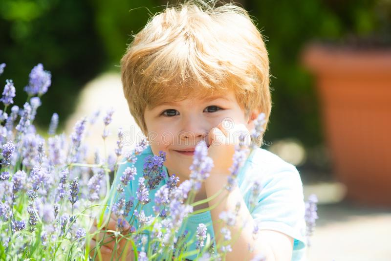 Happy summer boy. Kids smile. Rest on the lavender fields. Summer holidays. Fresh lavender scent. Lavandula background royalty free stock image