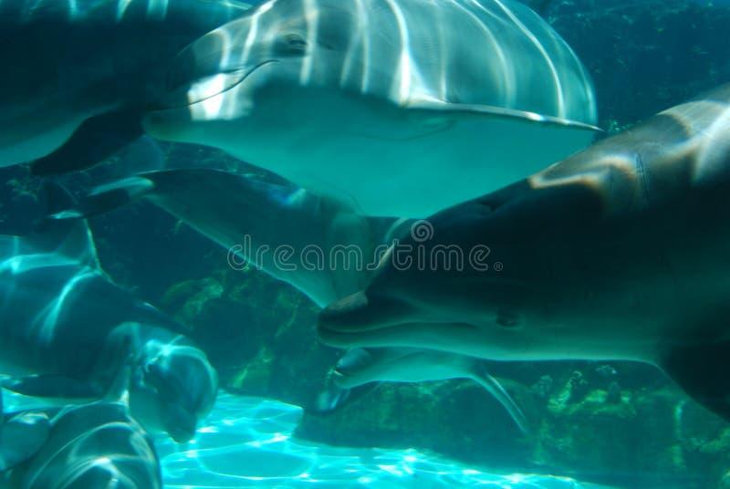 Happy Swimming Dolphins stock photo