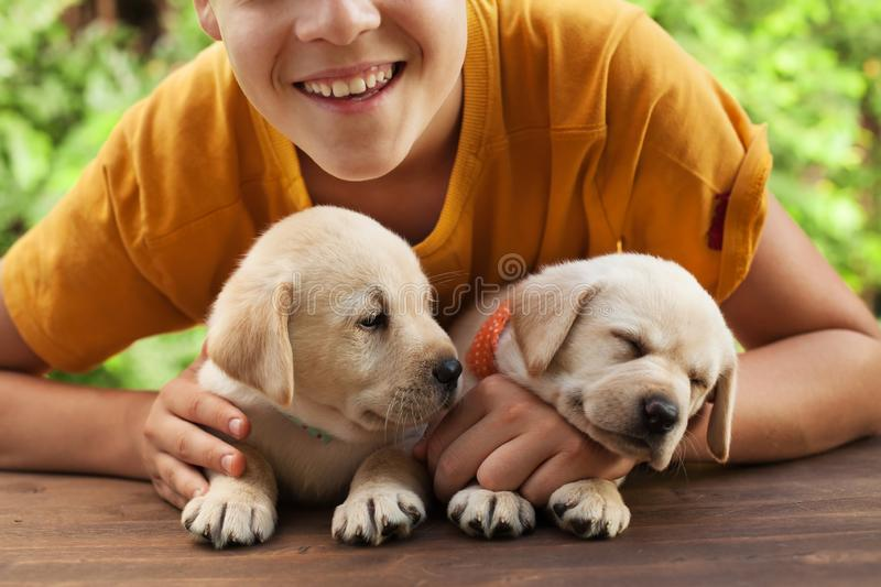 Happy teenager boy posing with his cute labrador puppies. Smile and hug the doggies - close up stock photography