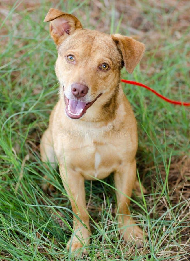 Happy Terrier Mixed Breed Dog. Walton County Animal Control, humane society adoption photo, outdoor pet photography royalty free stock photo