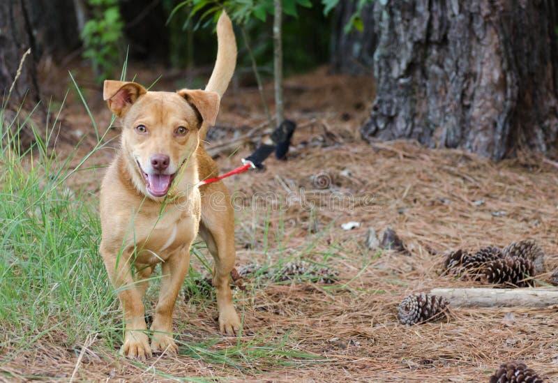 Happy Terrier Mixed Breed Dog. Walton County Animal Control, humane society adoption photo, outdoor pet photography royalty free stock photos