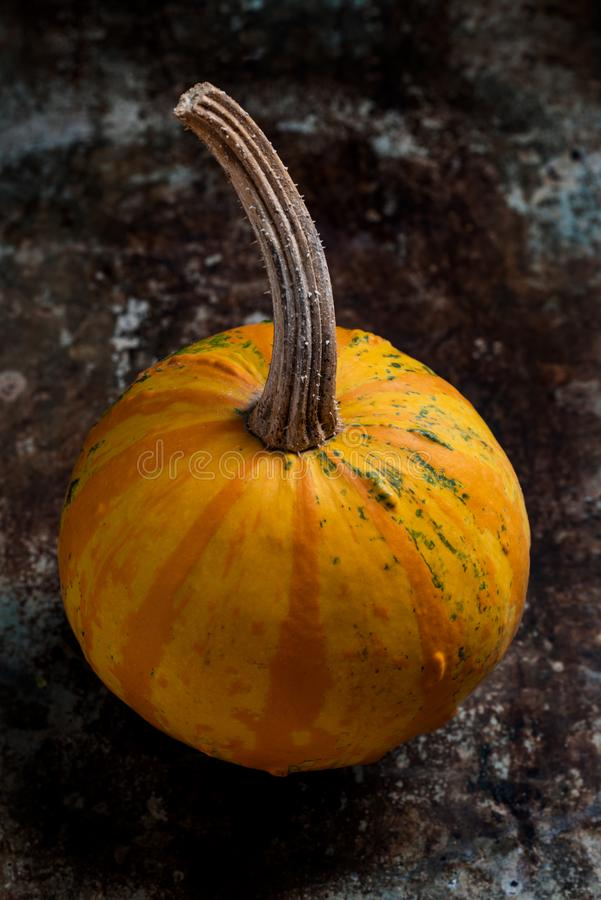 Happy Thanksgiving Background. Close up of a little decorative pumpkin, gourd, on rustic metal background. Autumn Harvest. royalty free stock photography