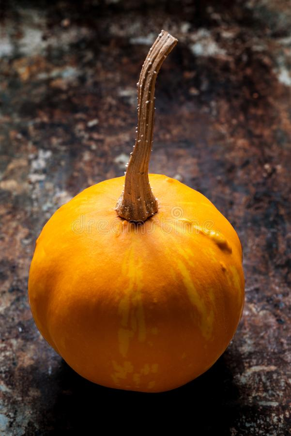 Happy Thanksgiving Background. Close up of a little decorative pumpkin, gourd, on rustic metal background. Autumn Harvest. stock photography