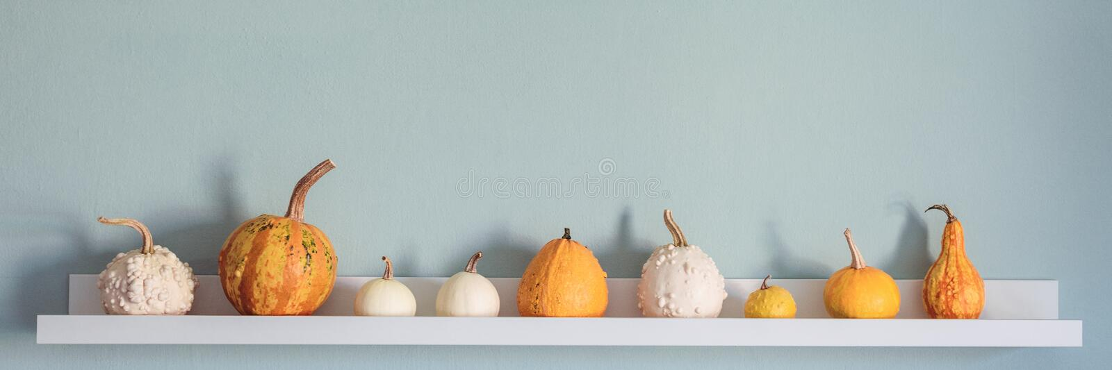 Happy Thanksgiving Background. Selection of various pumpkins on white shelf against pastel turquoise colored wall. Modern seasonal room decoration. Pumpkins royalty free stock images