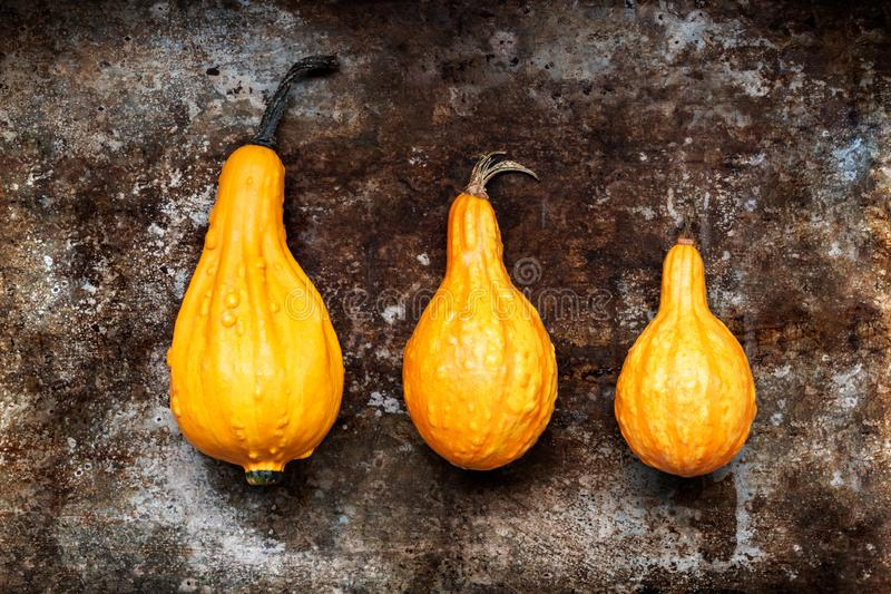 Happy Thanksgiving Background. Three orange pumpkins on rustic metal background with copy space. Autumn Harvest. stock photos