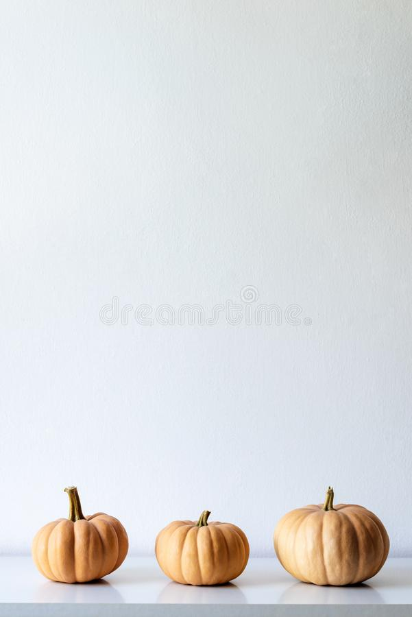 Happy Thanksgiving Background. Three pumpkins on white shelf against white wall. Modern minimal room decoration. stock images