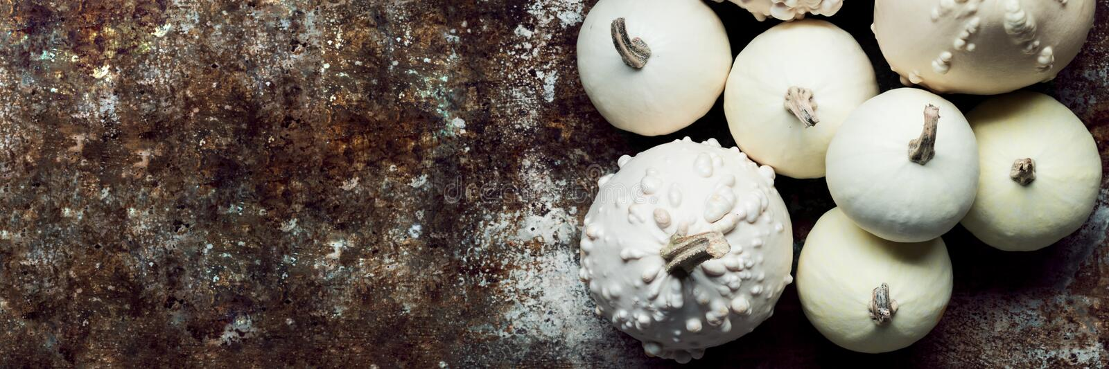 Happy Thanksgiving Banner. Little white pumpkins on rustic metal background with copy space. Autumn Harvest and Holiday minimal still life stock photos