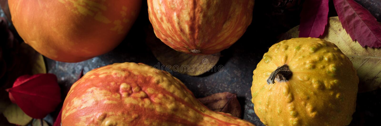 Happy Thanksgiving Banner. Selection of various pumpkins on dark metal background. Autumn Harvest and Holiday still life. Autumn vegetables stock photo