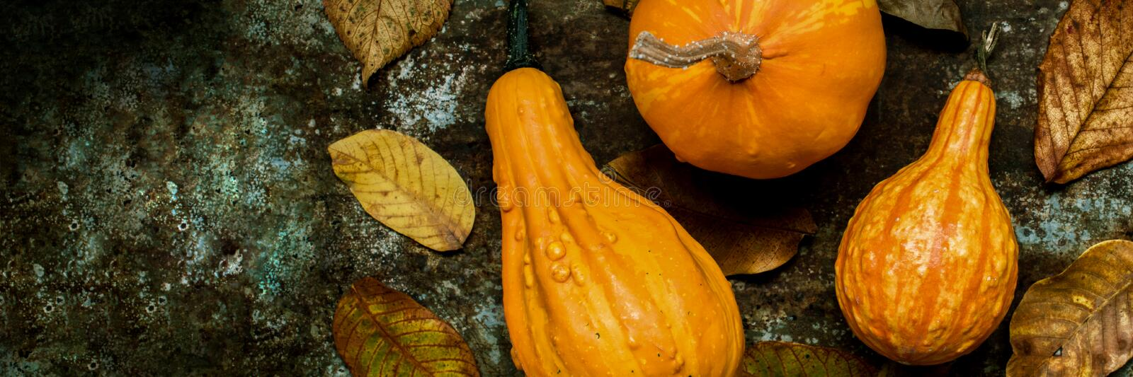 Happy Thanksgiving Banner. Selection of various pumpkins on dark metal background. Autumn Harvest and Holiday still life. Autumn vegetables stock photos