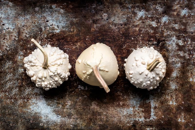Happy Thanksgiving Banner. Three white pumpkins on rustic metal background with copy space. Autumn Harvest. Happy Thanksgiving Banner. Three white pumpkins on stock image