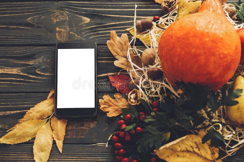 Happy Thanksgiving concept. Phone with empty screen and beautiful Pumpkin with bright autumn leaves, acorns, nuts, berries on woo stock photography