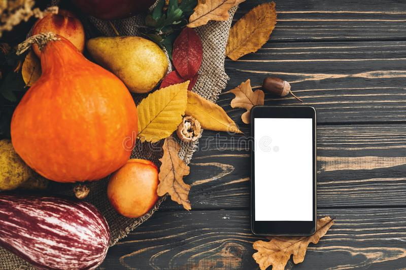 Happy Thanksgiving concept. Phone with empty screen and beautiful Pumpkin with bright autumn leaves, acorns, nuts, berries on woo royalty free stock photos