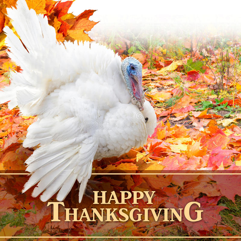 Happy Thanksgiving design. royalty free stock image