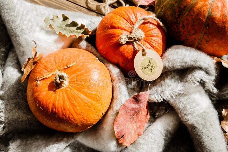 Happy Thanksgiving gift tag with corner border of colorful leaves and pumpkins over a rustic wood background royalty free stock images
