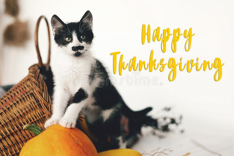 Happy Thanksgiving text, seasons greeting card. Thanksgiving sign. Cute kitty, pumpkin, wicker basket on wooden background. Cat royalty free stock photography
